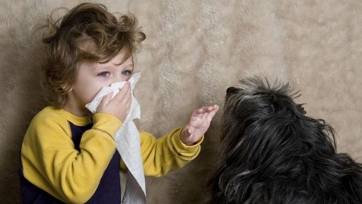 alergia perros gatos1