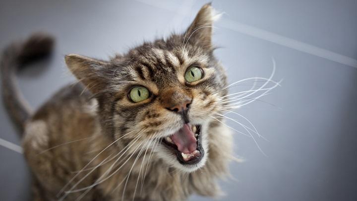 estres gatos