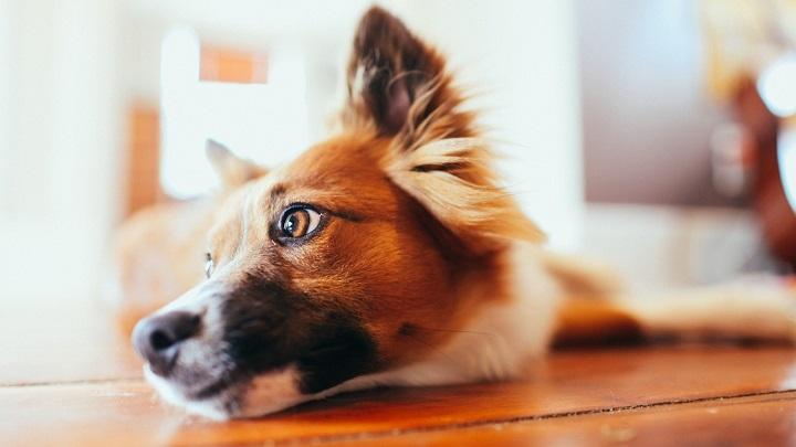 ojo perro