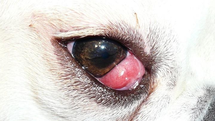 ojo perro1