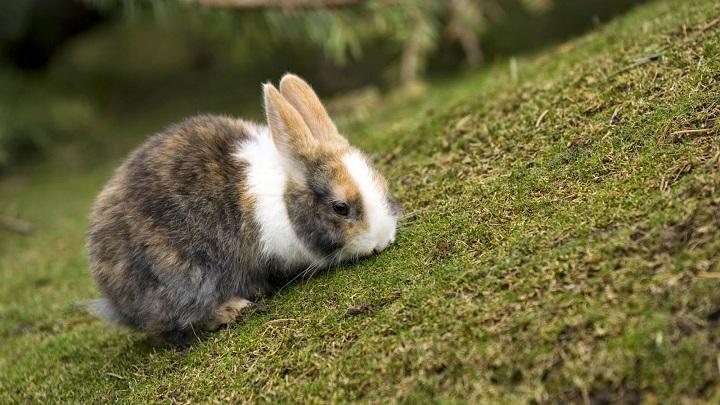 pasear conejo