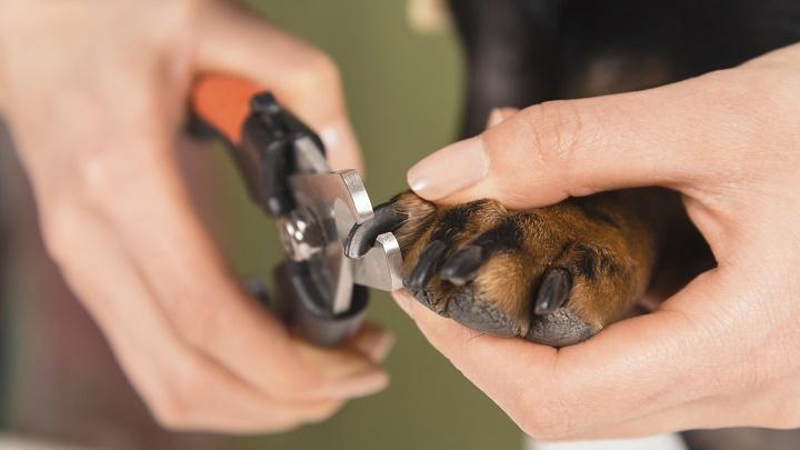 cortando unas perro