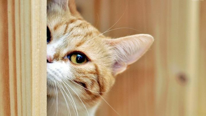 gato mal olor1