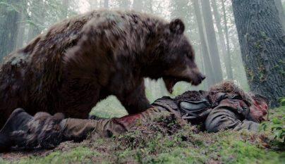 oso boxeo