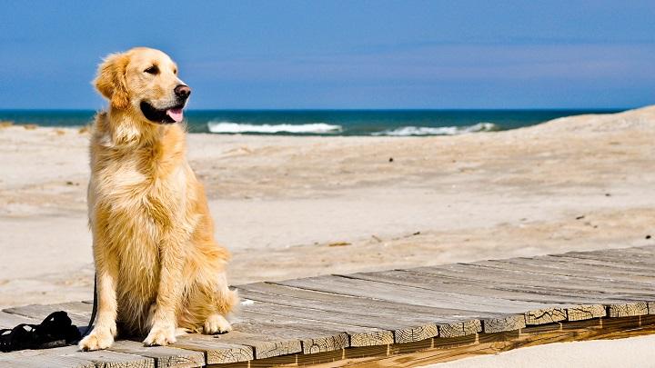 perro planes verano1