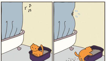 Comic gato10
