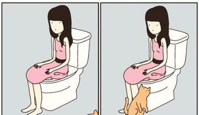 Comic gato11