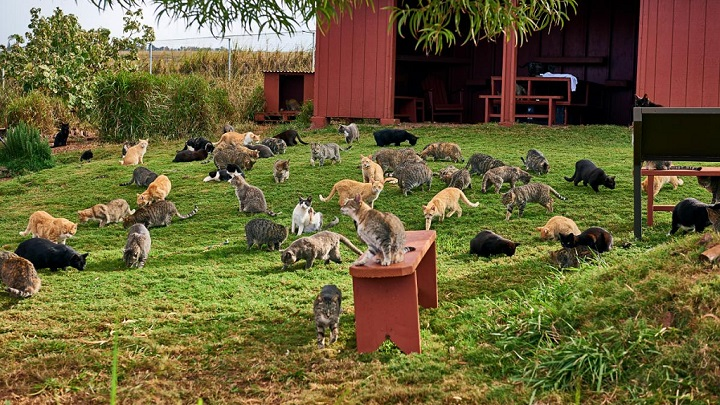 Lanai Cat Sanctuary foto