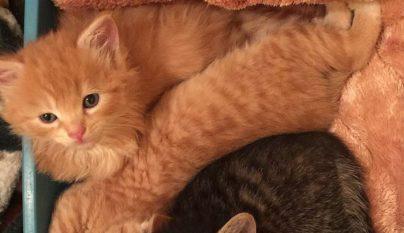 Lanai Cat Sanctuary10
