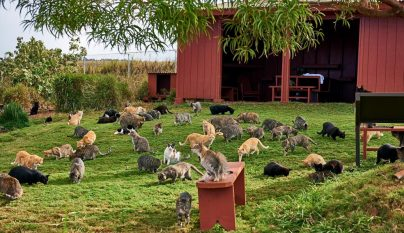 Lanai Cat Sanctuary12