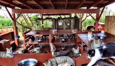 Lanai Cat Sanctuary2