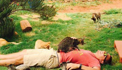 Lanai Cat Sanctuary3