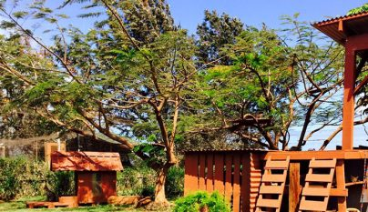 Lanai Cat Sanctuary4