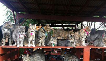 Lanai Cat Sanctuary7