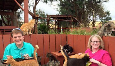 Lanai Cat Sanctuary8