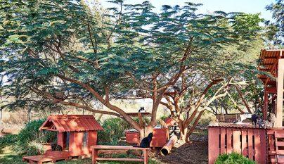 Lanai Cat Sanctuary9