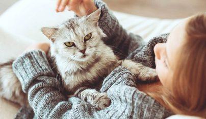 fiebre gato