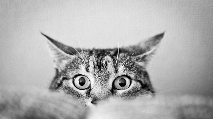 gato miedo