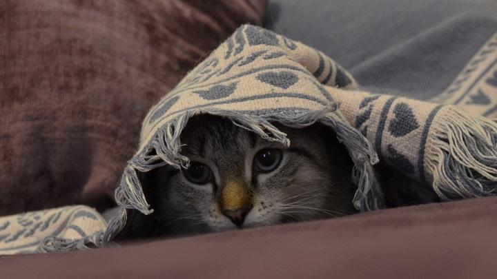 gato miedo1