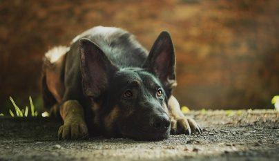 perro miedo