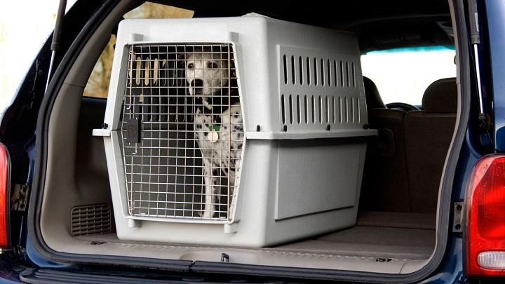 transportin perro1