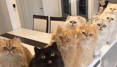12-cats-lady1