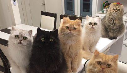 12-cats-lady10
