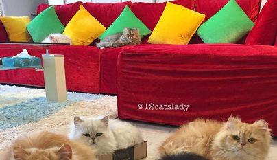 12-cats-lady11