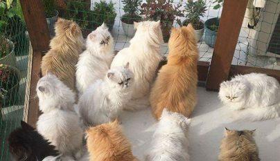 12-cats-lady12
