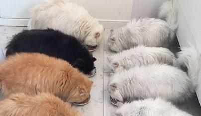 12-cats-lady3