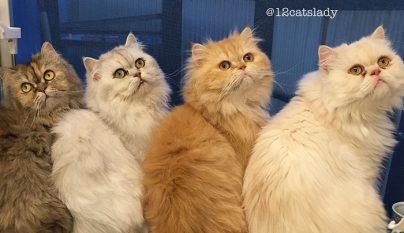 12-cats-lady5