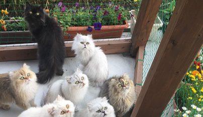 12-cats-lady6