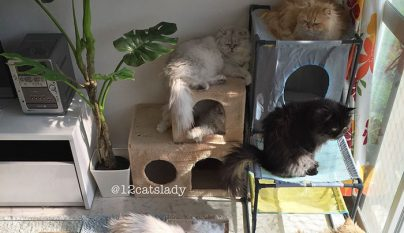 12-cats-lady7