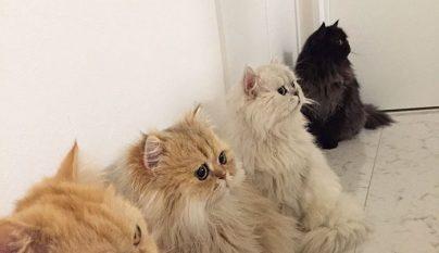 12-cats-lady8