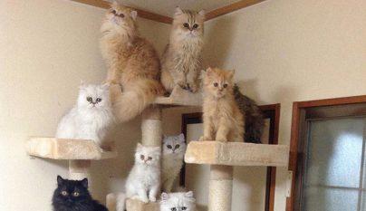 12-cats-lady9