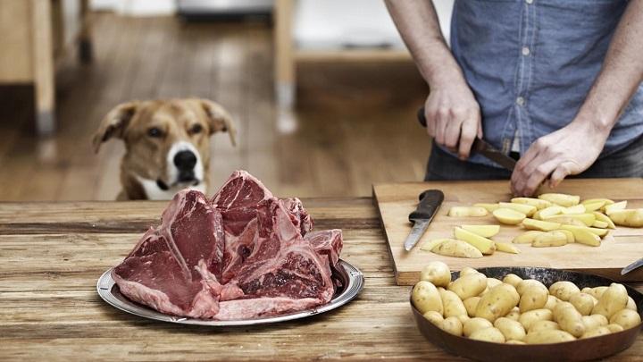 alimentos-humanos-perros1