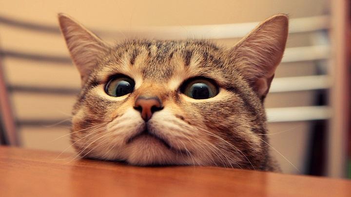 gato-anciano1