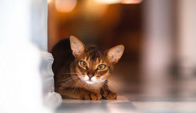 gato-asustado