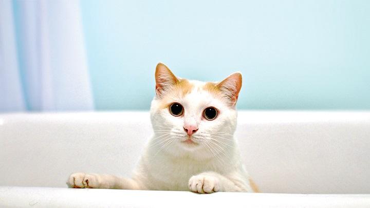 Consejos para ba ar a un gato - Banar gatos ...