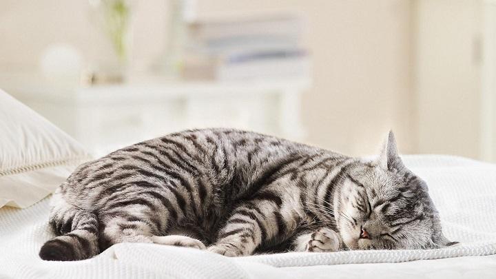 gato dormir1