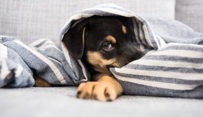 problemas urinarios perros