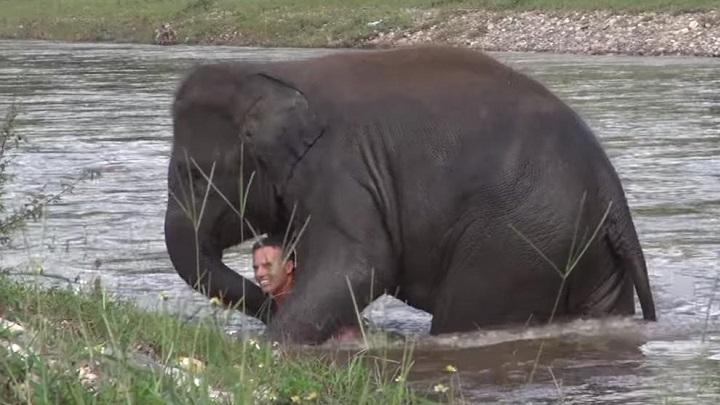 elefante-rio