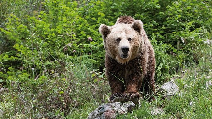 encuentros-con-osos