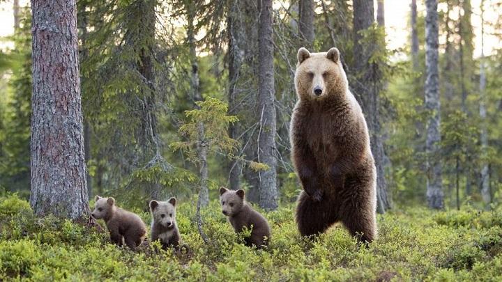 encuentros-con-osos1