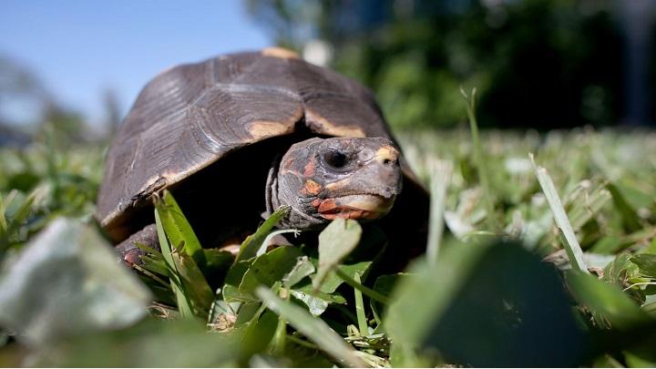 fabula-tortuga-liebre