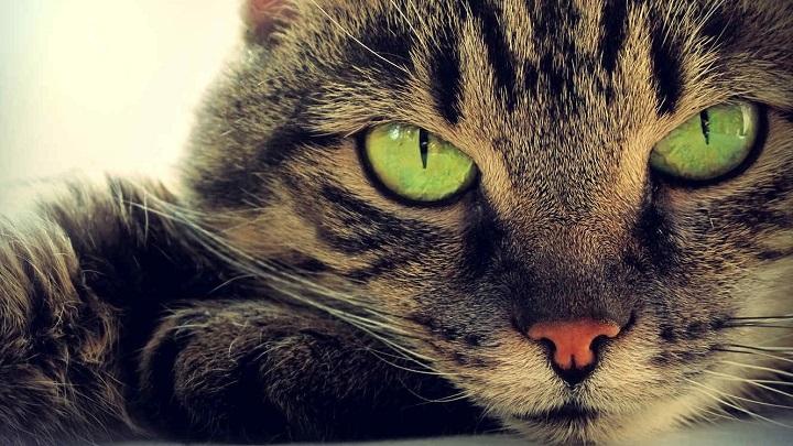 gato-banera
