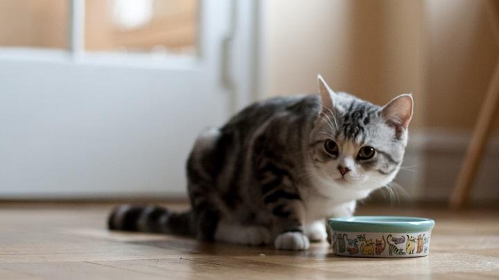 gato-comedero1