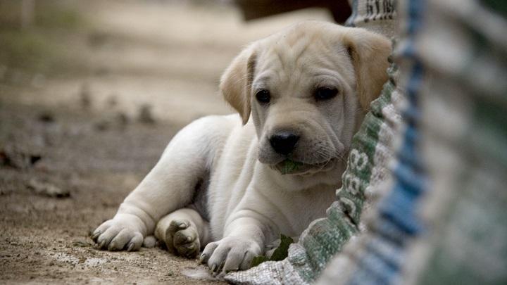 perros-abandonados