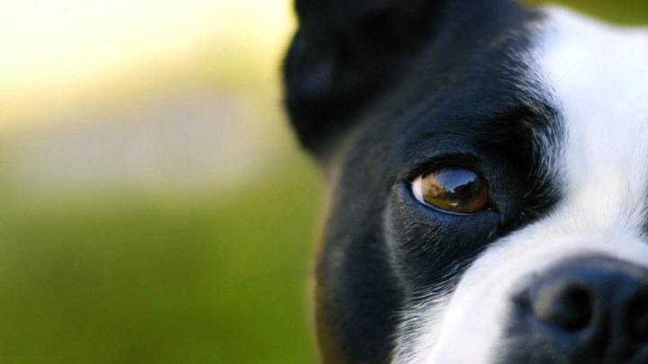 vista-perro
