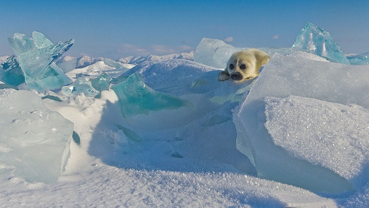 foca-bebe-foto1